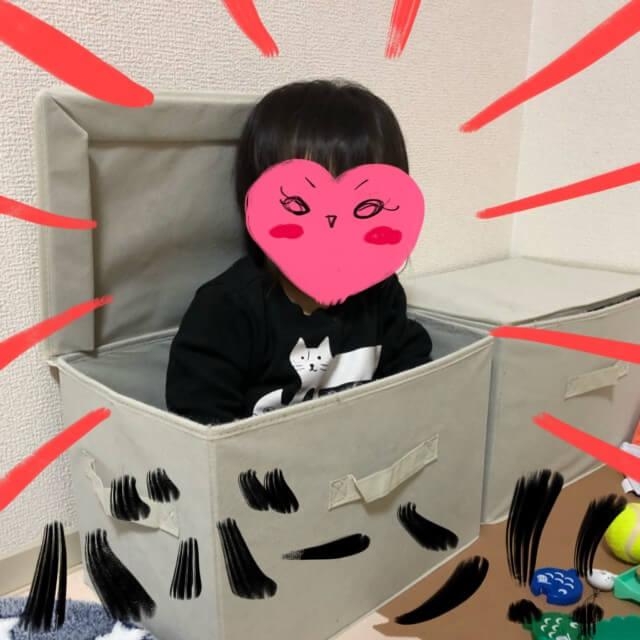 おもちゃを入れている箱に入るのがお気に入りです(*゚∀゚*)